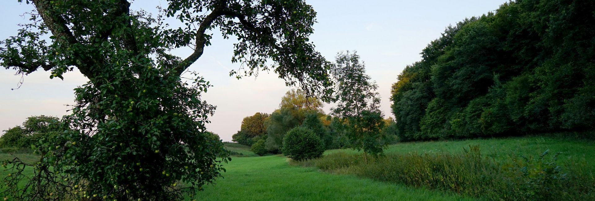 Landhaus Pension Haus Sonneck – Ausspannen mit Lust und Laune